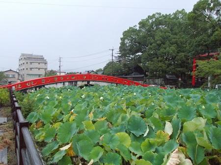 kumakuru059.JPG
