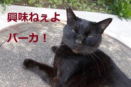 toyanishi149.JPG